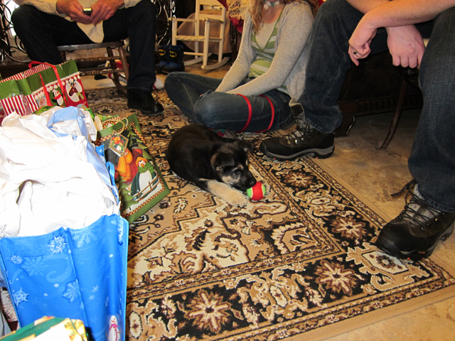 Christmas 2012 - We had some canine guests too